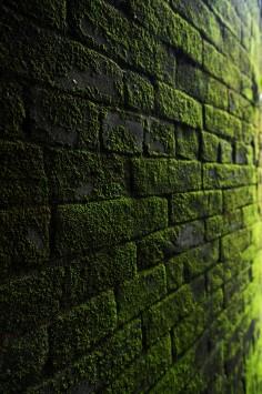 عکس زمینه بافت آجر پوشده شده با خزه سبز