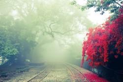 عکس زمینه ریل راه آهن در مه بهاری