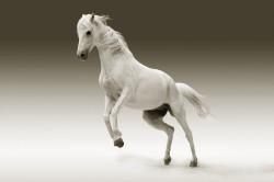 عکس زمینه پرش اسب سفید