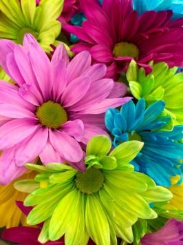 عکس زمینه گل رنگ صورتی قرمز زرد
