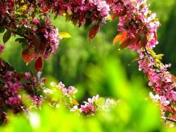 عکس زمینه گلبرگ گل بنفش