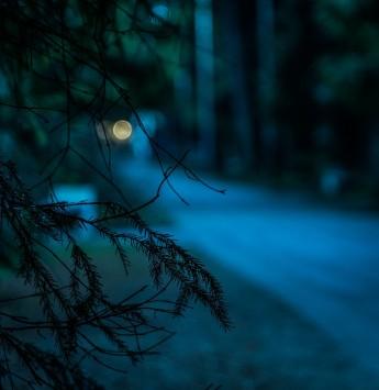 عکس زمینه برگ درخت در تاریکی