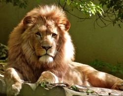 عکس زمینه کلوزآپ پرتره از شیر