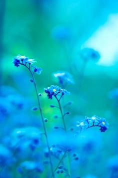 عکس زمینه گل بنفش آبی و سبز