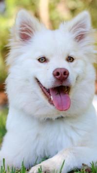 عکس زمینه سگ سفید خوشگل در چمن