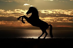 عکس زمینه پرش اسب در کنار دریا هنگام غروب خورشید