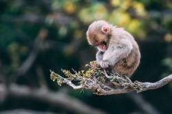 عکس زمینه بچه میمون در شاخه درخت
