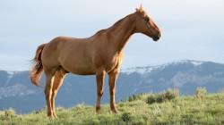 عکس زمینه اسب قهوه ای در زمین چمن