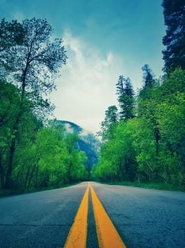 عکس زمینه مسیر جاده میان درختان سبز