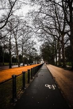 عکس زمینه جاده دوچرخه سواری در امتداد درختان زمستانی
