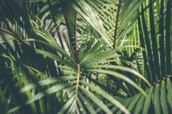 عکس زمینه برگ نخل سبز