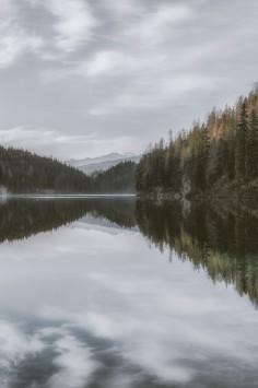 عکس زمینه دریاچه آرام احاطه شده توسط درختان