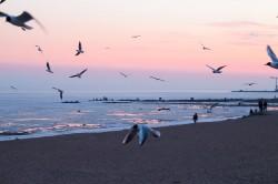 عکس زمینه عکس از پرواز پرندگان در ساحل