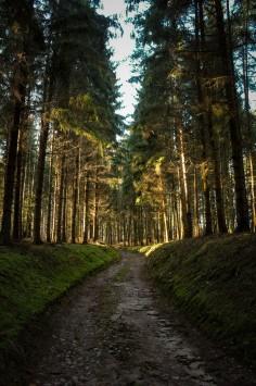 عکس زمینه مسیر سبز چمنی