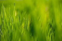 عکس زمینه چمن سبز زیبا