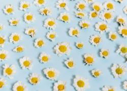 عکس زمینه گل زرد و سفید