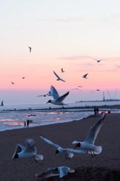 عکس زمینه پرواز پرندگان درغروب ساحل