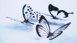 عکس زمینه پروانه های یخی