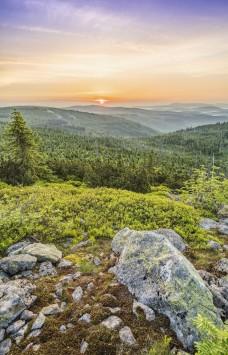 عکس زمینه جنگل و دشت زیبا
