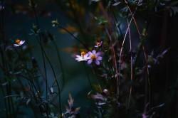 عکس زمینه گلبرگ گل سفید و بنفش