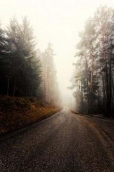 عکس زمینه جاده مه آلود جنگلی سرد
