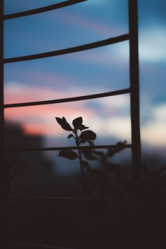 عکس زمینه نردبان و گل