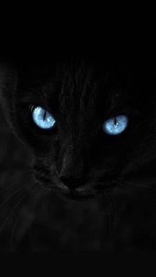 عکس زمینه چشم آبی گربه