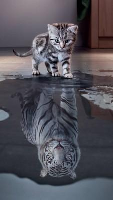 عکس زمینه بچه گربه و ببر