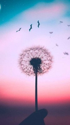 عکس زمینه رنگی قاصدک زیبا