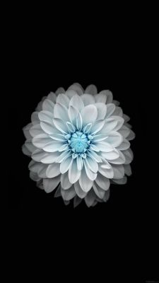 عکس زمینه گل سفید با بکگراند مشکی