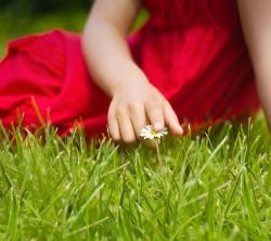 عکس زمینه LG G2 چمن و گل