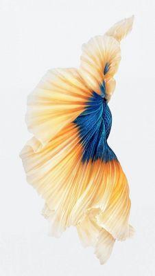 عکس زمینه ماهی آیفون 6S
