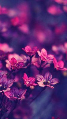 عکس زمینه گل های ریز صورتی زیبا