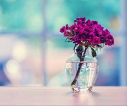 عکس زمینه گل سرخ آبی روی میز