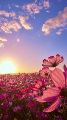 عکس زمینه دشت گل غروب