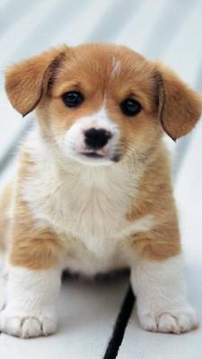 عکس زمینه بچه سگ بامزه