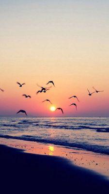 عکس زمینه غروب دریا و پرندگان زیبا