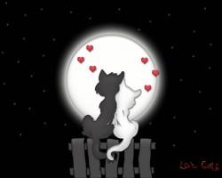 عکس زمینه گربه های عشق