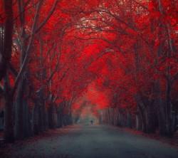 عکس زمینه طبیعت درختان قرمز