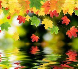 عکس زمینه برگ های طبیعت HD