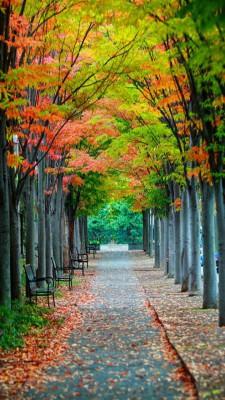 عکس زمینه پارک پاییزی زیبا