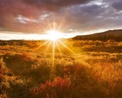 عکس زمینه طلوع خورشید در دشت طلایی