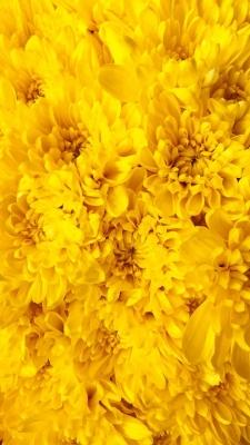عکس زمینه گل های زرد