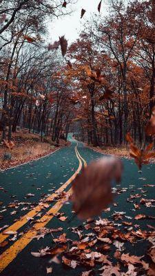 عکس زمینه باد پاییزی و جاده