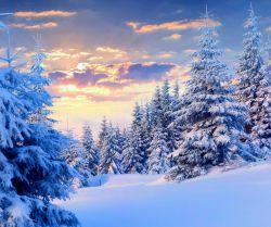 عکس زمینه درختان سفید در جنگل برفی رمستانی