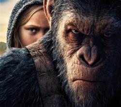 عکس زمینه میمون عصبانی جنگجو