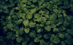 عکس زمینه برگ سبز و شبنم زیبا