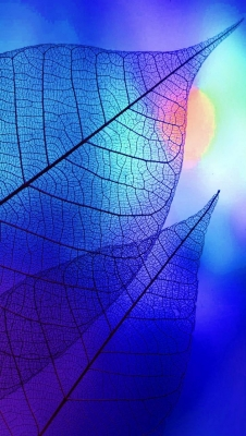 عکس زمینه برگ شفاف آبی