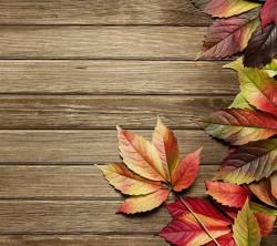 عکس زمینه چوب و برگهای پاییزی