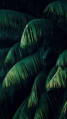 عکس زمینه برگهای سبز آویزان زیبا